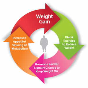 Bariatric News Bariatric Surgery Blog, News Weight Loss Surgery Information What is Set Point Theory? Definition, Theory and More.